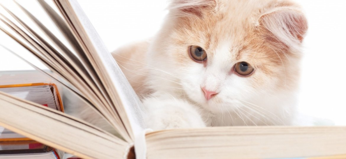 Cat-very-busy-in-reading-book
